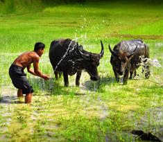 вьетнам лаос камбоджа тур